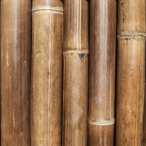 Bamboo trunks background texture