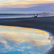 Driftwood at sunset, Victoria, Australia