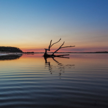 Beautiful piece of driftwood reflecting in the water at sunrise. Snowy River mouth, Victoria, Australia