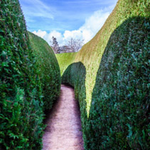 Long empty walkway between tall green walls of an outdoor maze