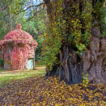 Tree at Maroondah Reservoir Park in Fall