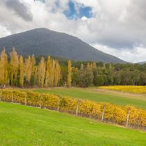 Landscape of Vineyard fields in Yarra Valley, Victoria, Australia in autumn