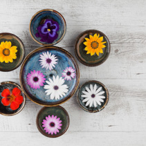 Colorful flowers floating in water in ceramic bowls on rustic wooden table. Top view with copy space.