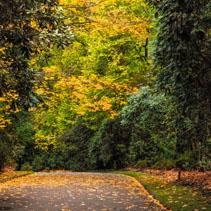 Empty footpath in fall.