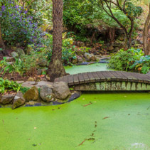 Small green decorative pond