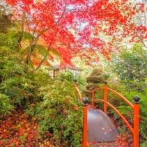 Japanese garden with footbridge and gazebo in Autumn