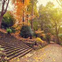 Autumn landscape with long staircase and footpath
