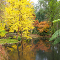 Beautiful pond with golden trees reflections in calm waters