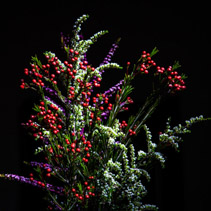 Arrangement of beautiful native Australian flowering plants on black background