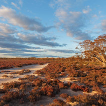 Native Australian beach shrubs landscape at sunset