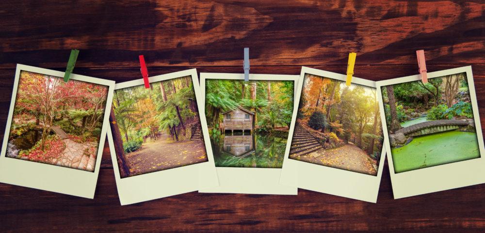 Instant photos of beautiful garden views in autumn hanging.