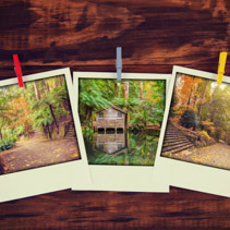 Instant photos of beautiful garden views in autumn hanging.