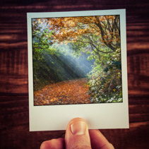 instant photo postcard photograph of moody sunlight shining thro