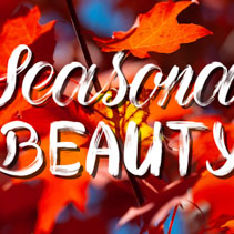 Seasonal Beauty - brush lettering on autumnal background