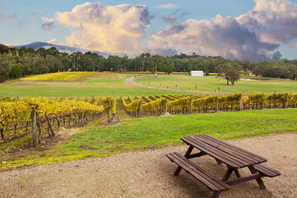 Beautiful Vineyard in Yarra Valley, Australia in autumn