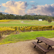 Beautiful Vineyard in Yarra Valley, Australia in autumn